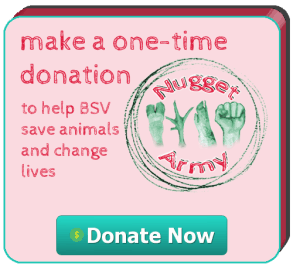 donate-now-button-1