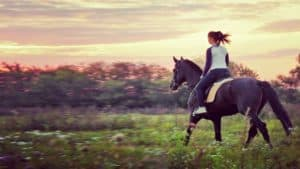 Woman riding a horse in a field at sunset