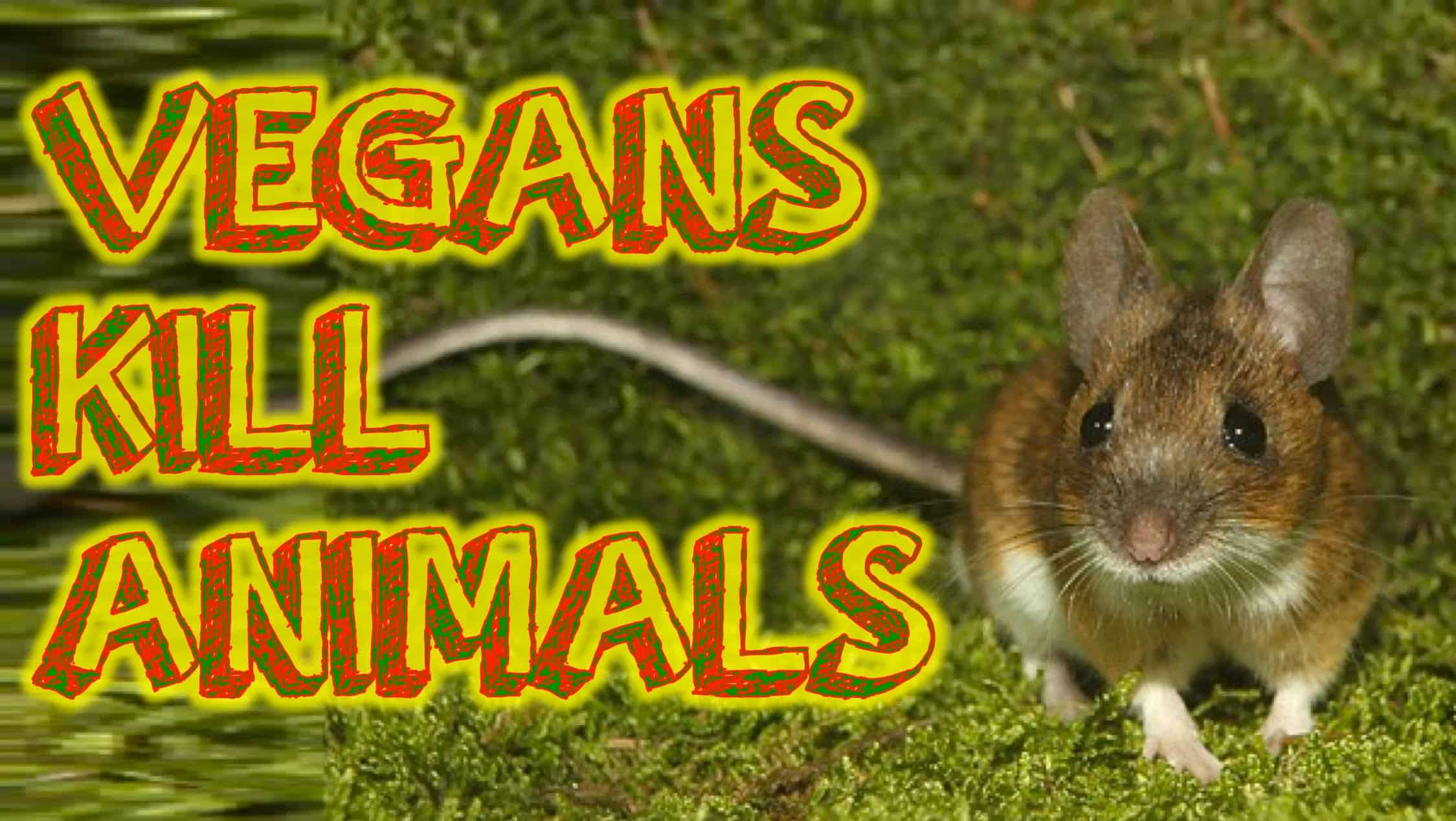 Can Pets Be Vegetarians, Too Can Pets Be Vegetarians, Too new picture
