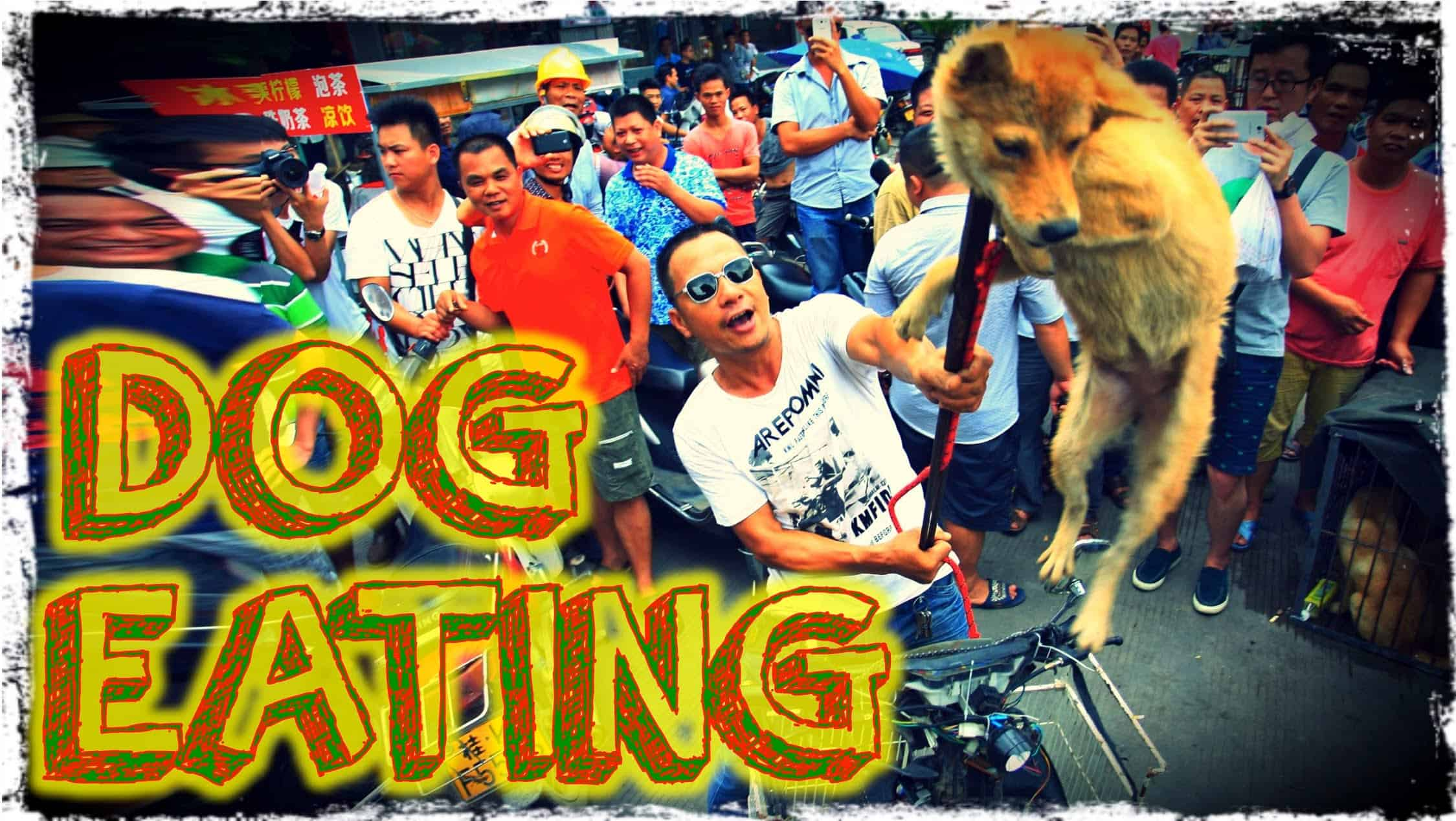 Why My Dog Isnt Eating